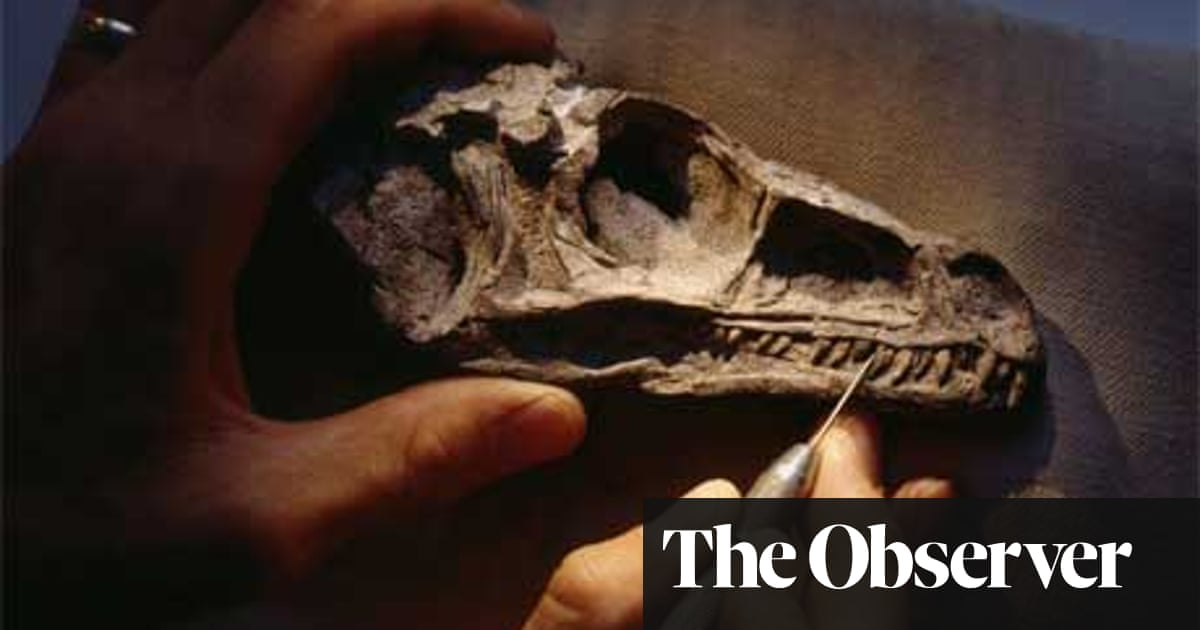 Dinosaurs: How to extract and display fossils | Science | The Guardian