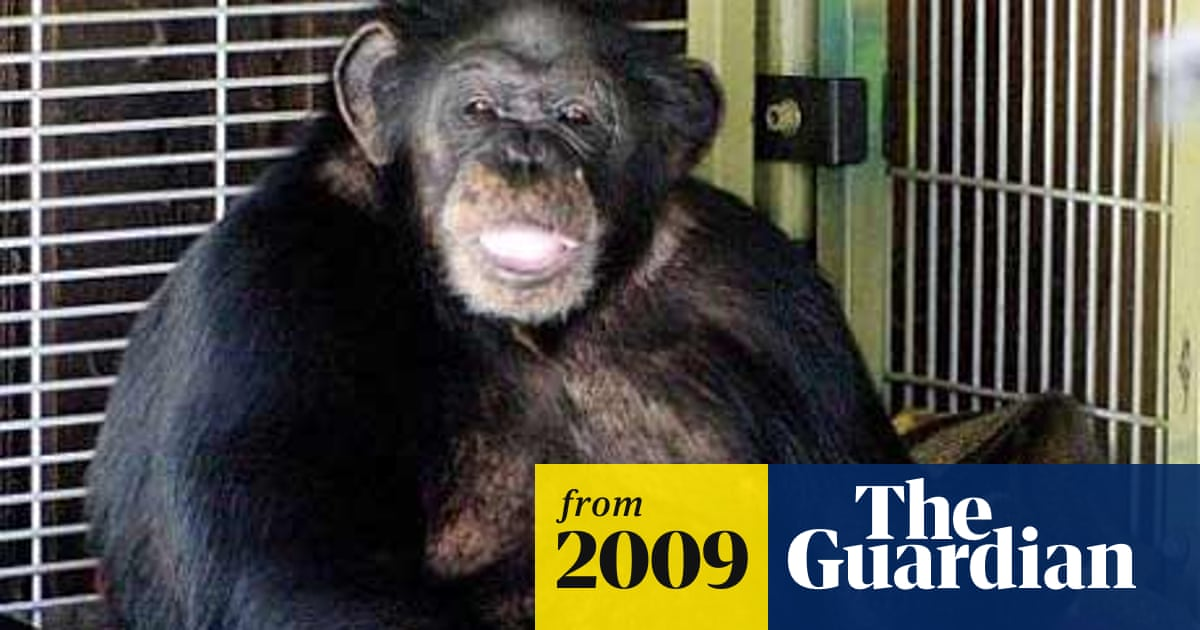 Chimpanzee shot after attack outside New York   US news