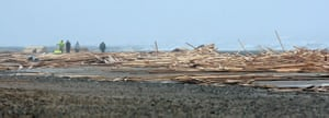 Gallery Timber galore: People walk through the timber on Ramsgate beach
