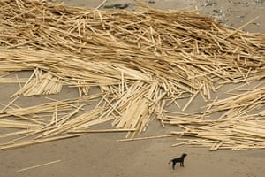 Gallery Timber galore: A dog stands near washed up timber on Ramsgate beach