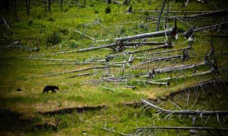 Global warming prompts increase in tree deaths