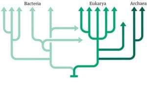 Tree of Life graphic