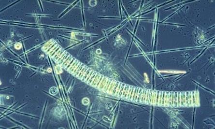 Polarstern Iron fertilisation experiment