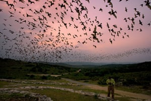 Gallery Eyewitness: Mexican free-tailed bats