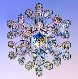 Gallery Snowflakes: A Stellar Dendrite snowflake