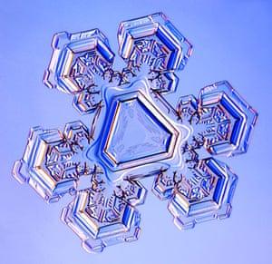 Gallery Snowflakes: A Triangular Crystal snowflake