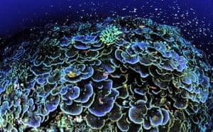 Gallery The week in wildlife: Coral is seen off Jarvis Island