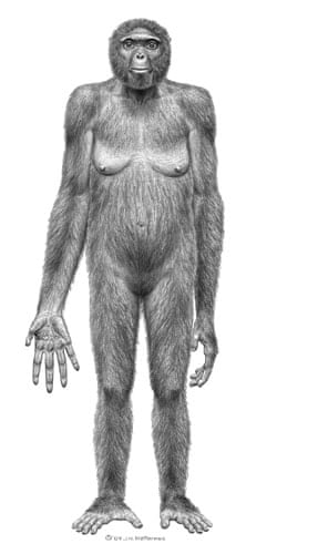 Ardi : Ardipithecus ramidus lived 4.4 million years ago in what is now Ethiopia