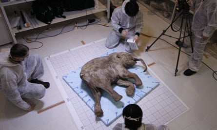 Scientists perform an autopsy and DNA analysis on Lyuba, a wooly mammoth