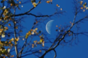 Autumn: The moon behind trees