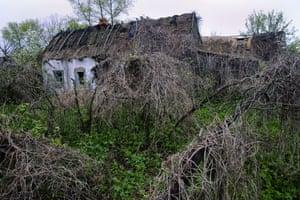 Earth Alert: Chernobyl contaminated zone