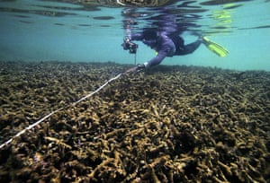 Earth Alert: Bleached coral reef in Hikkaduwa Sri Lanka