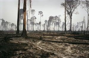 Earth Alert: An area of deforestation on the border of the Amazon rainforest, Brazil