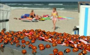 Ladybird: Ladybugs at Baltic Sea beach Warnemuende