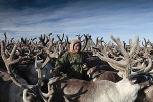 Yamal Peninsula: impact of climate change on Nenet people and their reindeer herd in Siberia