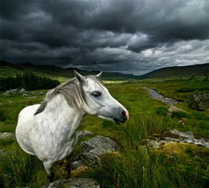 Landscape photograph: The Horse Whisperer, Snowdonia, Wales. Highly commended