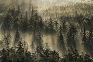 Landscape photograph: Burrator Plantation in summer, Dartmoor, Devon