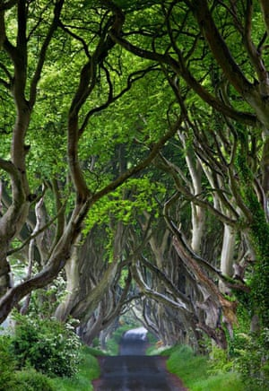 Landscape photograph: The Dark Hedges, Co. Antrim, Northern Ireland