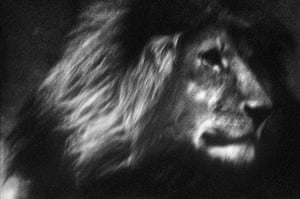 Veolia Environnement: Wildlife Photographer of the Year 2009 : Lone lion by Britta Jaschinski