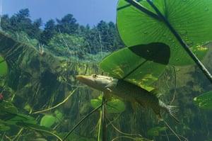 Veolia Environnement: Wildlife Photographer of the Year 2009
