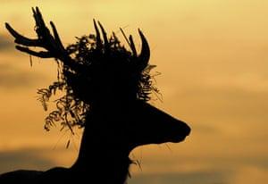 Winners: Veolia Environnement wildlife photographer of the year 2009