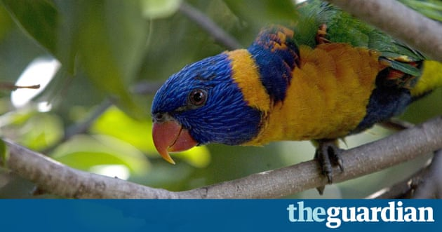 Rainbow Lorikeet Food Recipes
