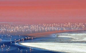 week in wildlife: flamingos in Eduardo Abaroa Andean National Fauna Reserve, Bolivia