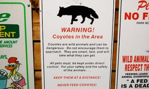 Coyote warning sign