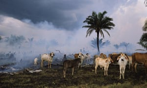 Pastureland cleared for cattle in the Amazon