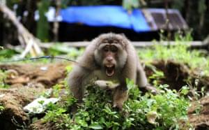 Week in Wildlife: A monkey in the earthquake-ravaged village of Tandikat