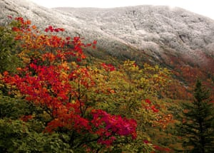 Week in Wildlife: New Englands fall foliage meets with an early snow in Franconia, US