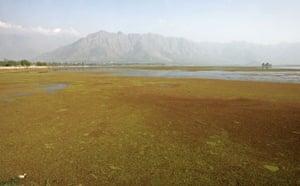 Week in Wildlife: A general view of Kashmir's polluted Dal Lake in Srinagar