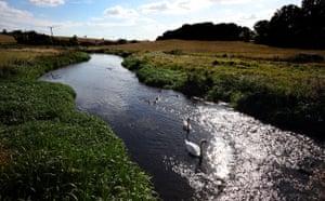 Week in Wildlife: Ducks and swans swim along the River Lea near East Hyde, UK
