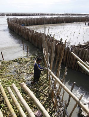 Week in Wildlife: a fence along the coastal line in a mangrove plantation, Thailand
