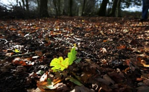 Week in Wildlife: Autumn leaves fall to the ground in a wood, forest Hoxne, Suffolk