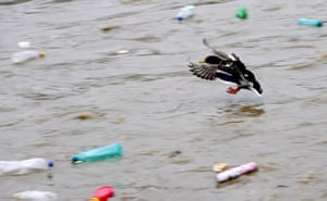 Week in Wildlife: A ducks flies as plastic bottles float , in Skopje