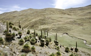 Week in Wildlife: A colony of Puya Raimondii plants are seen in Chupaca, Peru