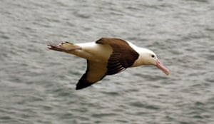 week in Wildlife: Fishing industry threatens albatrosses