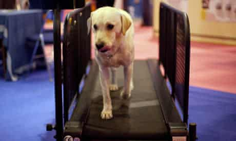 pet dog on treadmill