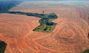 brazil celebrates 45 reduction in amazon deforestation
