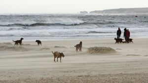 UK gales: People walk their dogs during a sand storm at Sandbanks near Poole