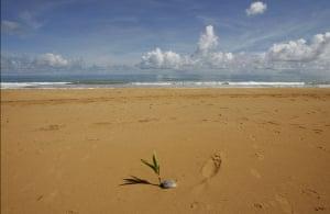 "Week in Wildlife: Beach ""La Selva"" in the Northeast Ecological Corridor reserve, Puerto Rico"