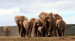 Week in Wildlife: A head of African elephants, Addo Elephant National Park, South Africa