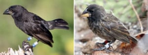 Week in Wildlife: Galapagos Island new finches sp
