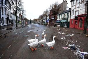 Cockermouth floods: Geese wander in Cockermouth High Street in Cumbria