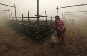 mass sacrifice in Nepal: buffaloes are held in pens before a mass sacrifice ceremony in Nepal