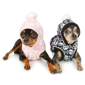Gifts for pets: hoods