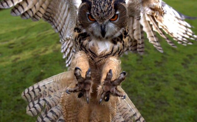 "Aninimal Book: TOM CLARK: The Avenger (Lorine Niedecker: ""A monster owl..."")"