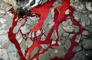 Eid al-Adha: Blood drains away from a slaughtered cow