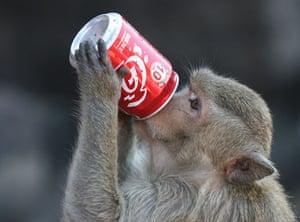 monkey bufett in Thailand: Monkey Party in Lopburi